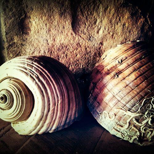 Interesting Pictures Interesting Objects Decoration Decorations Objects Dekoratif Şile Gününfotoğrafı Photographic Memory Denizkabukları Deniz Kabuğu