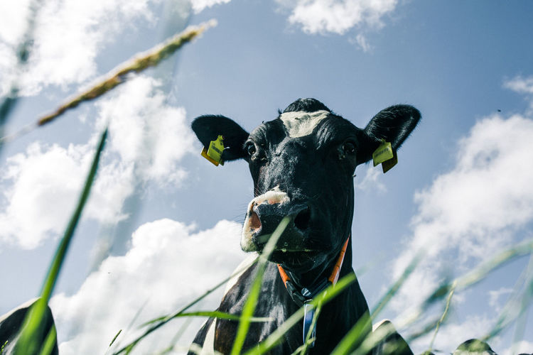 Low angle view of cow statue against sky