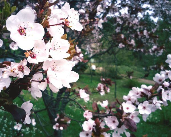 😜🌼 Relaxing That's Me Springtime EyeEmSerbia Alexandracubrak
