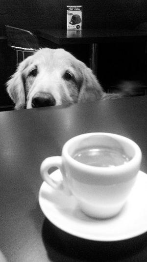 Dog Pets Coffee