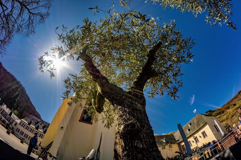 Fisheye Sunny Day Tree Plant Low Angle View Sky Architecture Building Exterior Built Structure Sunlight Growth Sunbeam