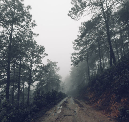 Forest road Fog and rain in the evening Tree Plant Road The Way Forward Direction Forest Land Transportation Nature Fog Tranquility Growth Dirt Road Diminishing Perspective Day Beauty In Nature Dirt No People Sky WoodLand Outdoors Treelined