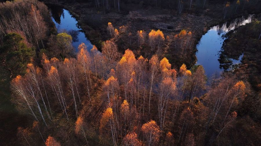 Fall from above DJI X Eyeem Tree Nature Beauty In Nature No People Growth Outdoors Tranquil Scene Tranquility Mountain Scenics Day Landscape Sky Tranquility Full Frame Beauty In Nature The Week On EyeEm Fall Beauty Rural Scene Autumn Collection Lanscape Photography Forrest Water Reflections River View Curved River River Reflection Perspectives On Nature Autumn Mood