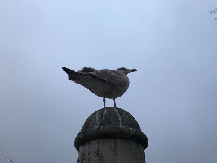 Bird Animal Themes Vertebrate Animal Animals In The Wild Animal Wildlife Sky No People Day Nature Perching Clear Sky Low Angle View Group Of Animals Copy Space Outdoors Two Animals Seagull Architecture
