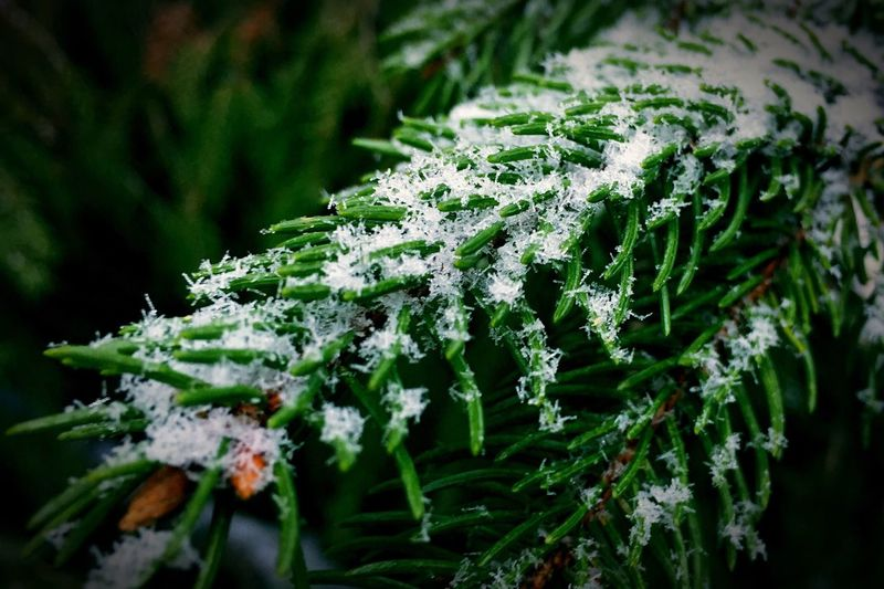 Open Edit Snowflake Snow Pinetrees Winter Get Close Details Macro
