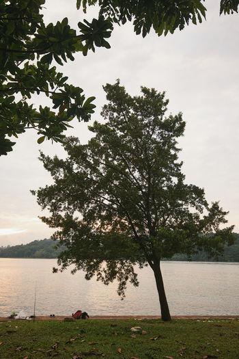 Tree on field by lake against sky