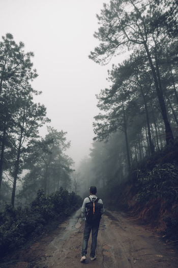 Forest road Fog and rain in the evening Tree Plant Real People Lifestyles Leisure Activity Nature Full Length Direction Rear View The Way Forward Road People Two People Sky Day Walking Growth Fog Men Outdoors