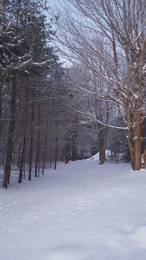 Beautiful Winter Morning in the Adirondacks Bare Tree Branch Cold Cold Temperature Covered Covering Day Forest Frozen Nature Outdoors Season  Snow Tranquility Tree Trunk Weather Winter