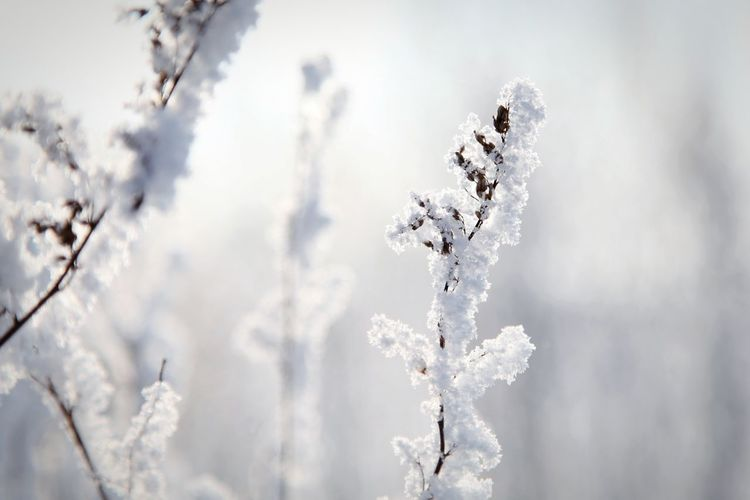 silvery silence Silver  Contrast Seed Covering White Backgrounds Plant Silence Transience Sun Reflection Fozen Tranquility Winter Snow Cold Temperature Frozen Tree Nature Day Ice Outdoors No People Close-up Snowflake Beauty In Nature Snowing Branch