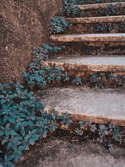 High angle view of steps by wall