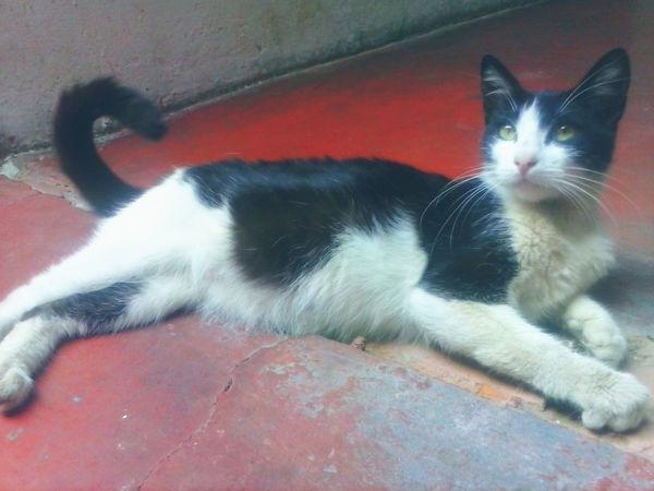 Petlover Cat♡ Enjoying Life Relaxing