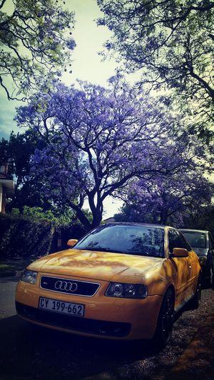 Sakura Trees Cape Town Boys And Their Toys Audi S3