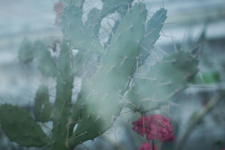 Plant Growth Beauty In Nature Close-up Nature Leaf Plant Part No People Day Green Color Focus On Foreground Freshness Selective Focus Fragility Flower Vulnerability  Cactus Greenhouse
