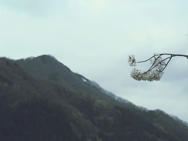Sky Collection Supernormal 桜 山