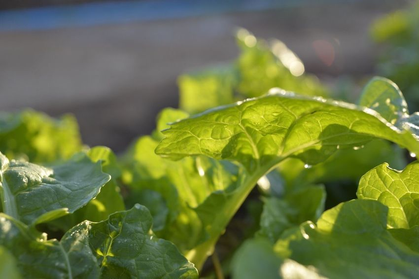 Leaf Nature Growth Green Color Close-up Plant Freshness No People Outdoors Fragility Beauty In Nature Day Water