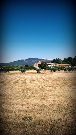 Mont Ventoux Vaucluse Provence. Landscape Field No People Nature Tranquility Beauty In Nature Rural Scene Blue Tranquil Scene Outdoors Day Grass Scenics Clear Sky Agriculture Tree Mountain Sky
