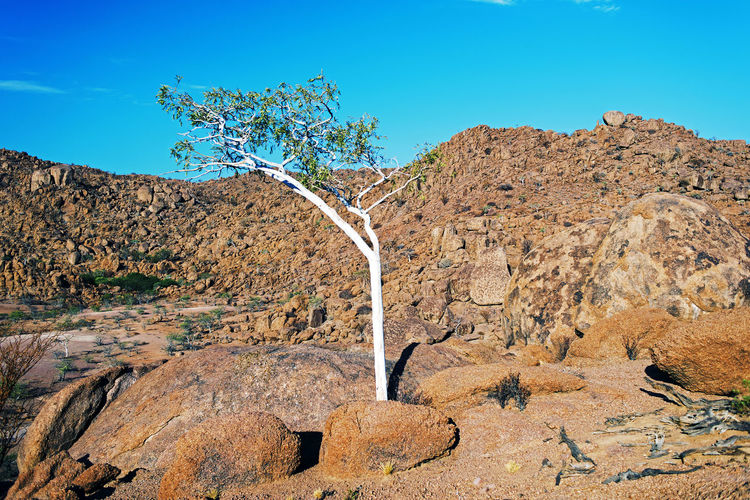 A tree in the desert Sky Rock Solid Nature Rock - Object Plant No People Scenics - Nature Beauty In Nature Day Blue Tranquil Scene Tranquility Clear Sky Sunlight Mountain Non-urban Scene Landscape Environment Tree Outdoors Formation Arid Climate Climate Africa