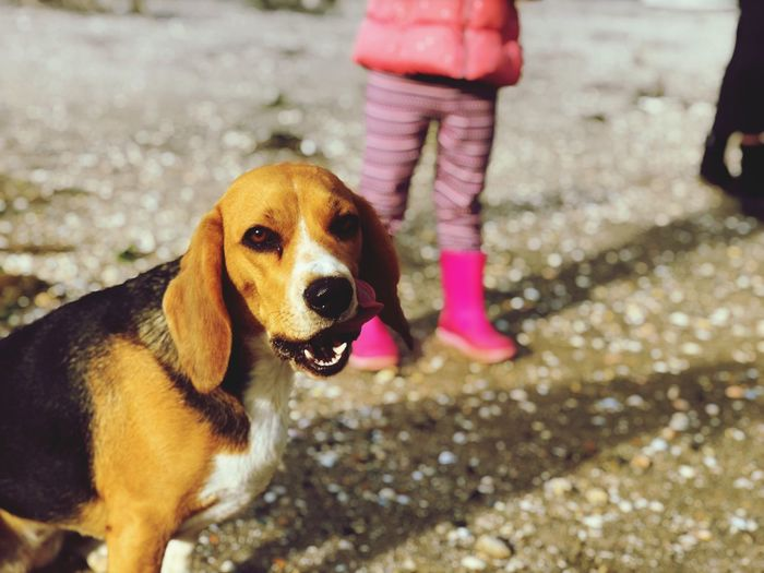 Dog One Animal Pets Animal Themes Low Section One Person Domestic Animals Real People Walking Standing Day Focus On Foreground Human Leg Mammal Pink Color Looking At Camera Portrait Outdoors Close-up People