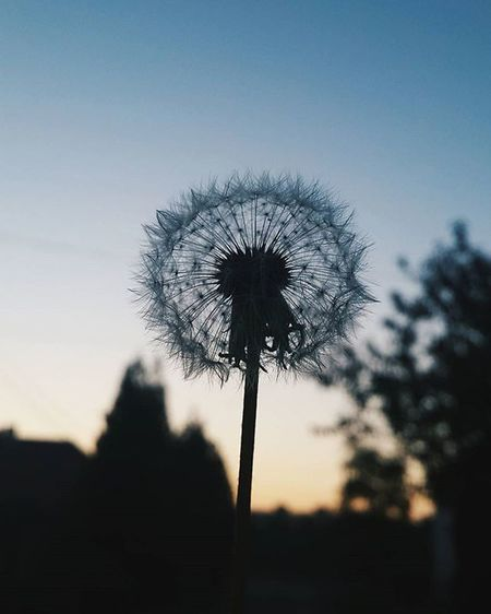 From the end of summer🌻 D is for dandelion VSCO Vscocam Vscobeau Vsconature Shotsofresh Vscovisuals Vscohungary 9Vaga_Colors9 Mist_vision Vscorussia Vscorus Garden Sunsetporn Mik Nature_sultans 9vaga_dailytheme9 Rsa_ladies Tv_sunsets Landscape Tv_allnature Tv_living Transfer_visions 9vaga_skyandviews9 Transfer_visions_nm2 Tv_flowers hiyapapayaphotoaday nature_brilliance global_ladies moodysnap super_photosunsets