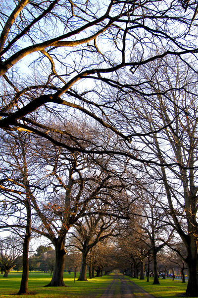Christchurch Green New Zealand Scenery Picnic Tree Trunk Trees Weekend Winter Wintertime Bare Tree Botanical Garden Branch Garden Hagley Park Landscape Leisure Nature New Zealand No People Outdoors Park Relaxing Moments Tree Win The Game Winter Wonderland