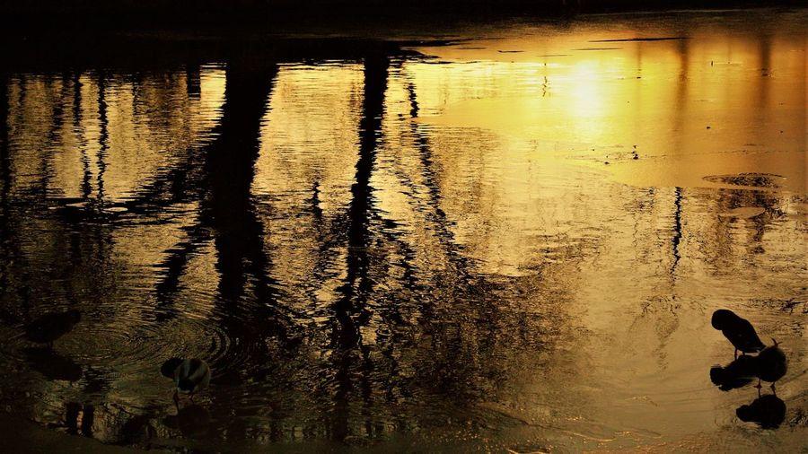 Mallard Duck having a wash before bedtime. Rauma Ganal Reflection Water River Bird Animal Themes Silhouette EyEmNewHere
