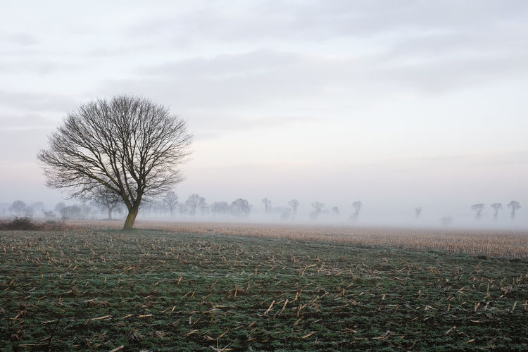 Lonely bare tree in a countryside morning landscape In Black and white Bare Tree Beauty In Nature Cloud - Sky Environment Field Fog Hazy  Isolated Land Landscape Nature No People Non-urban Scene Plant Remote Scenics - Nature Sky Solitude Tranquil Scene Tranquility Tree