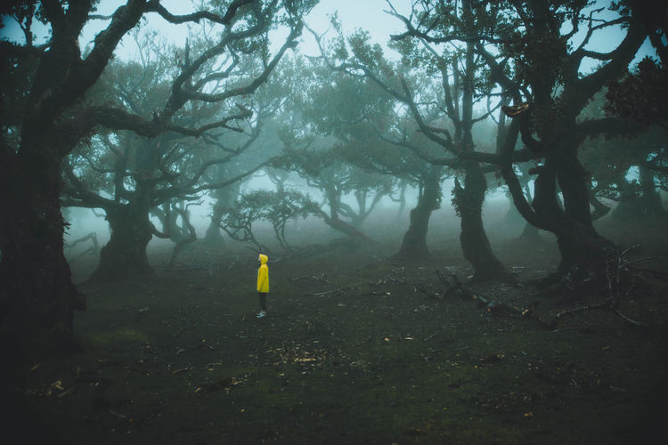 Alone Dark Fanal Madeira Madeira Island Madeira Islands, Portugal Portugal Quietness Rain The Great Outdoors - 2018 EyeEm Awards Travel Travel Photography Trees Europe Fog Forest Island Moody Nature Outdoor Photography Outdoors Raincoat The Great Outdoors Yellow Yellow Raincoat EyeEmNewHere