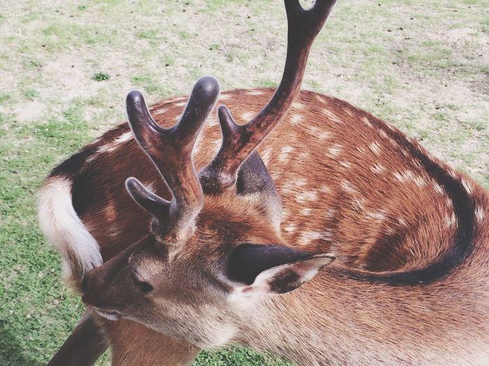 Deer Cute
