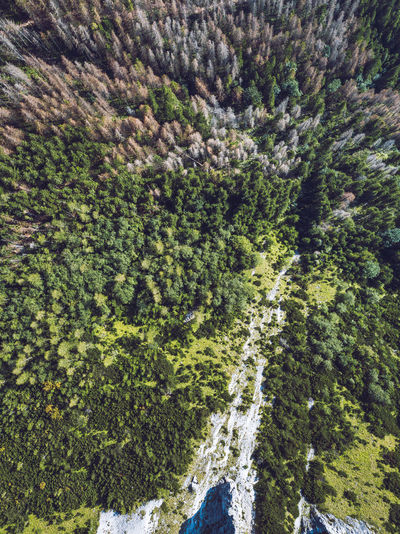 High Tatras Aerial Aerial Shot Drone  Nature Beauty In Nature Day Expore Mountains Forest Forest Photography Freshness Green Color High Angle View Landscape Mavic Mavic Pro Mountain Nature No People Outdoors Scenics Tranquil Scene Tranquility Tree Wide Angle