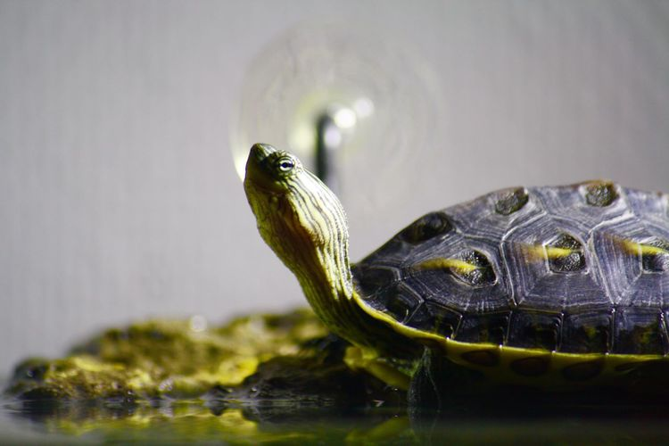 Sunnyturtle Turtle Littleturtle Ourpet Relaxing Eyem Gallery Lovephotography  Enjoying Life Eyemphotography