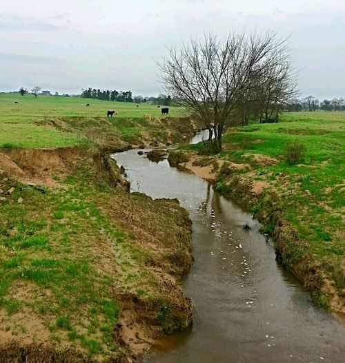 Spring rain causing the creeks to fill. Nature Water Rural Scene Reflection Scenics Landscape Outdoors Sky Tree Beauty In Nature Grass No People Agriculture Marsh Stream - Flowing Water Day Springtime