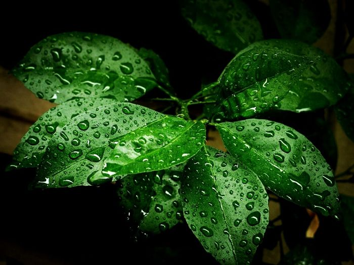 Leaf Green Color Drop Nature Beauty In Nature Water Plant Growth Freshness