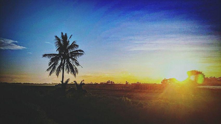 Landscape Silhouette At Alor Setar Malaysia Sunlight Outdoors Sunbeam