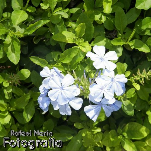 Hermosa naturaleza/creacion perfecta Enjoying Life