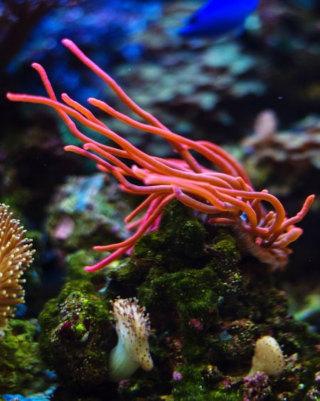 Coral Underwater UnderSea Coral Red Water Rock Close-up Aquarium Sea Anemone Nature Ecosystem  Beauty In Nature Fishtank