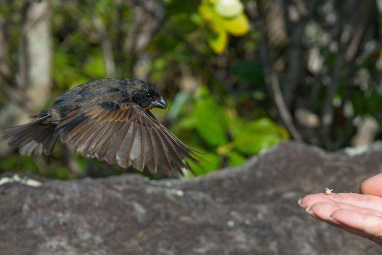 Close-up of hand flying bird