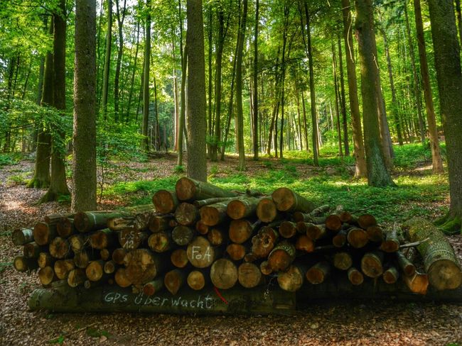 Seen in the forest near Aschaffenburg...you'll be watched.... EyeEm Nature Lover The Environmentalist – 2014 EyeEm Awards TreePorn Our Planet