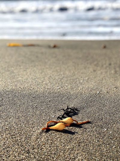 Up close on the beach Nature Morning Ocean Good Morning Nature Photography Nature_collection Beach Land Sand Sea Water Nature Day Focus On Foreground Beauty In Nature