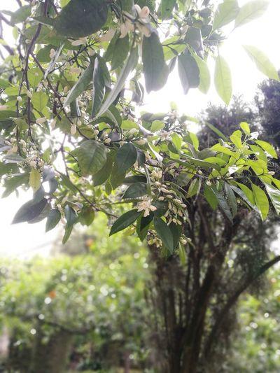Miarma Sevilla Spain Azahar Sevilla Modern Hospitality Tree Branch Greenhouse Leaf Sunlight Olive Tree Close-up Plant Sky