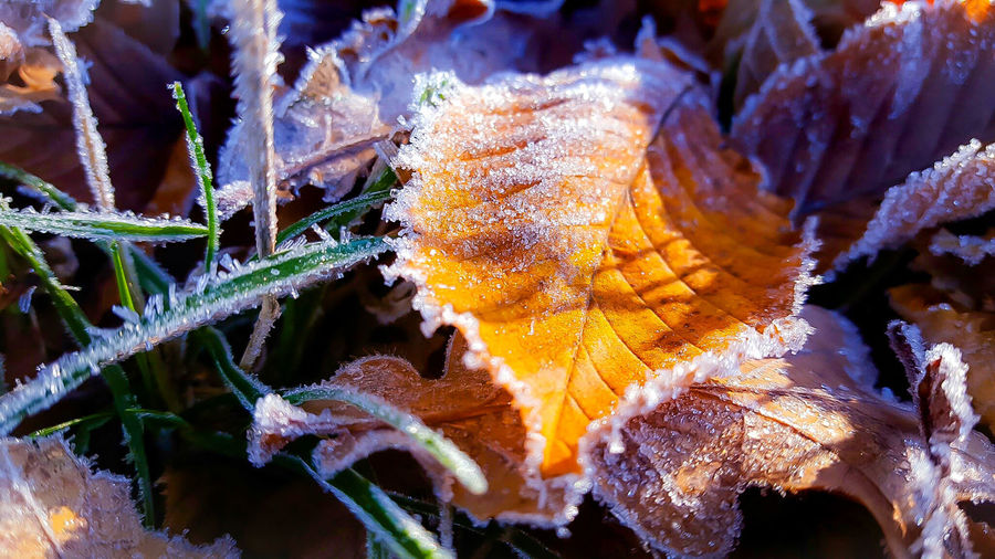 Close-up of frosty leaves on field