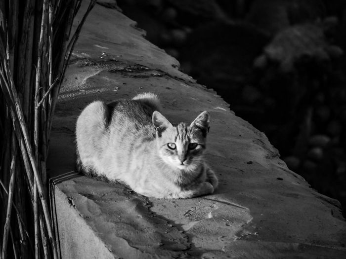 Domestic Cat One Animal Feline Pets Animal Themes Mammal Looking At Camera Domestic Animals No People Portrait Sitting Day Outdoors Nature Modern Workplace Culture