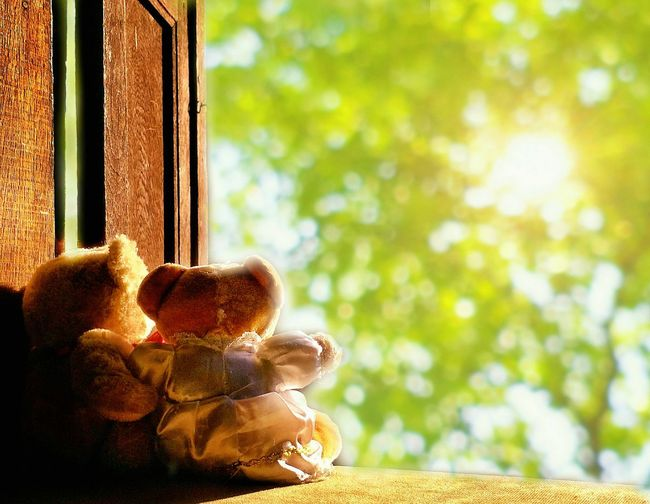 2 teddy bears on window sill are looking at many growing plants in the garden with morning warm light in love concept Buddy Nature Bokeh Park Garden Beautiful Window Sill Romantic Friendship Love Romance Blur Background Foreground Back Lighting Colorful Morning Warm Sunlight Backside EyeEm Selects Tree Window Close-up Growing Blooming Teddy Bear Plant Life In Bloom Toy Stuffed Toy