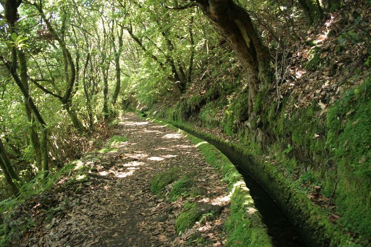 Beauty In Nature Day Forest Grass Green Color Growing Growth Levada Levada Walk Lush Foliage Madeira Madeiraisland Narrow Nature No People Outdoors Remote The Way Forward Tranquil Scene Tranquility Tree Tree Trunk Trekking UNESCO World Heritage Site WoodLand