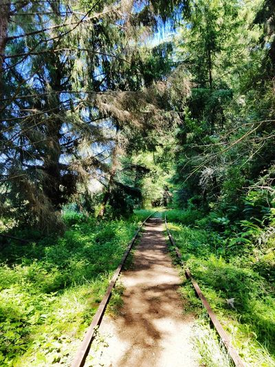 Old Train Track Trail Train Tracks Old Train Tracks Tree Shadow Sunlight Forest Sky Green Color Grass Pathway Countryside Woods Greenery Green