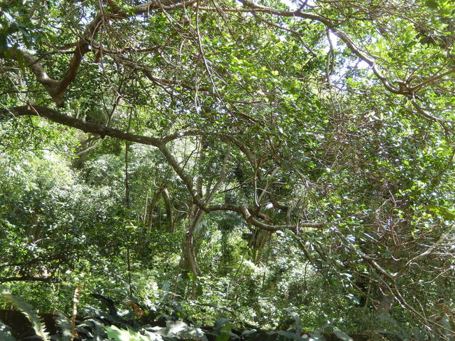 Amazona Amazonas Ecological Reserve Green Color Plant Tree Tree Trunk Trees Amazon Amazon Rainforest Amazonia Beauty Beauty In Nature Blossom Botany Eco Tourism Flower Landscape Outdoors Plants And Flowers Rainforest Tropical Tropical Climate Tropical Plants Tropical Tree