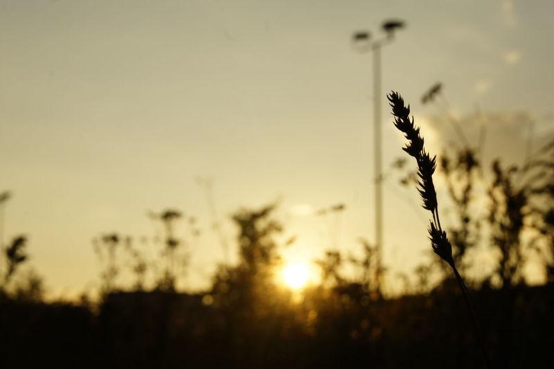 Beautiful Wheather Nature Sunlight Chillout Day Day Inspiration No People Outside Sky Sun Sunset Sunshine