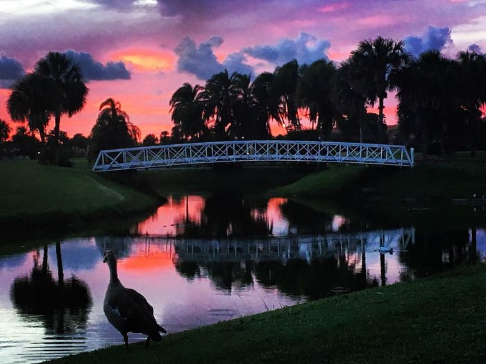 Masterpiece Ducks At The Lake Plant Sky Sunset Silhouette Beauty In Nature Built Structure