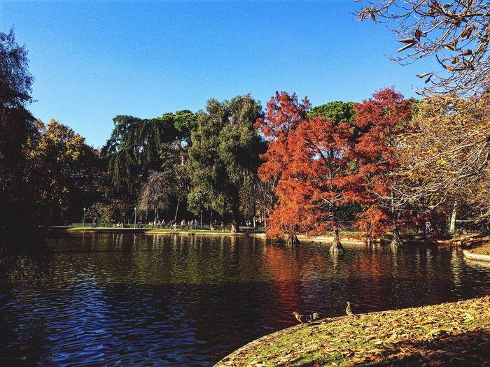 Autumn Autumn Colors Autumn Leaves Autumn🍁🍁🍁 Autumn Collection Autumn 2016 Autumnbeauty Autumn Trees Autumn Sky Autumn Leafs Autumn Colours I Love Autumn 🍁🍂🎃☀️