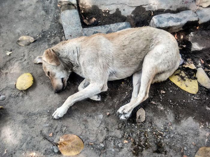 Stray Dog Sleeping On Street