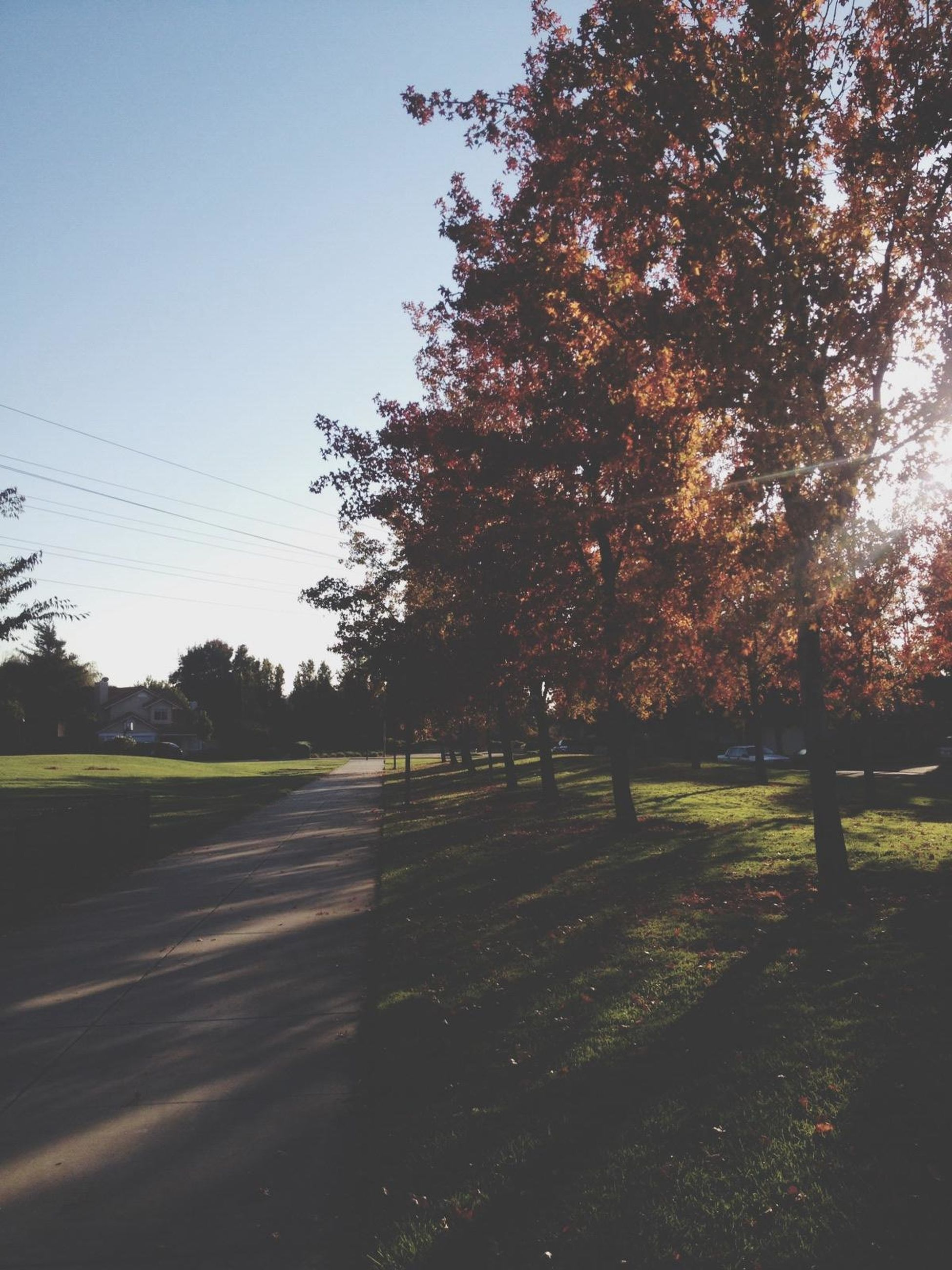 tree, clear sky, tranquility, road, landscape, tranquil scene, field, transportation, nature, sunlight, growth, beauty in nature, scenics, shadow, street, sky, the way forward, outdoors, grass, no people